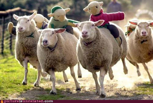 wtf-pics-sheep-on-sheep